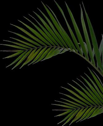 inner leaf1